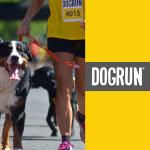 900x900-dog-run