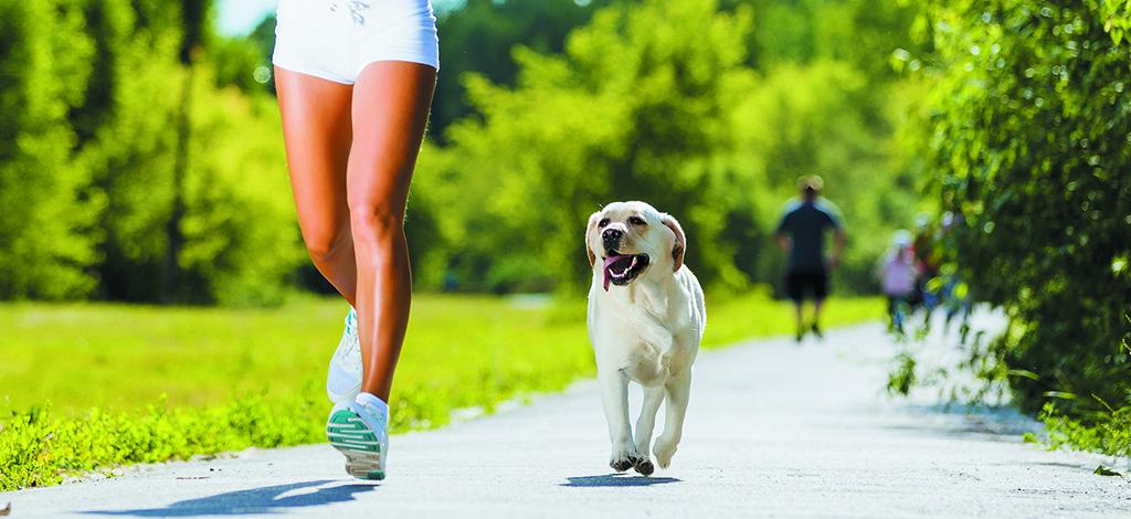 ¿Por qué está bueno salir a correr con tu perro?